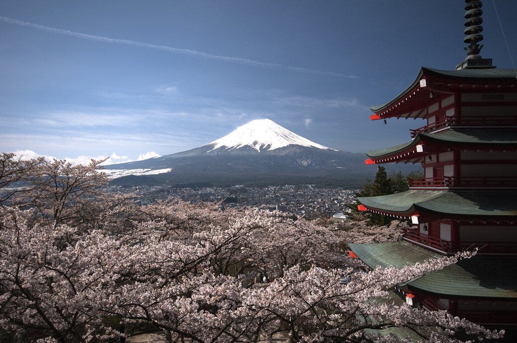 mount-fuji-cherry-blossoms
